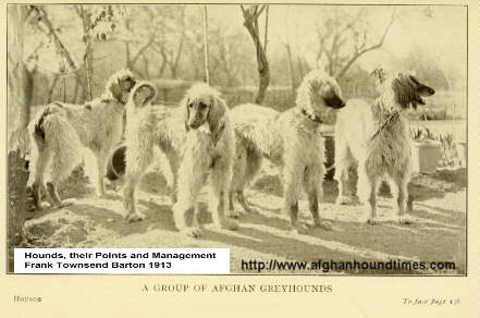 http://www.afghanhoundtimes.com Capt Barff's Hounds in India