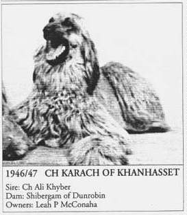 Afghan Hound Times AHCA BOB 1947 Ch Karach Of Khanhasset photo/report