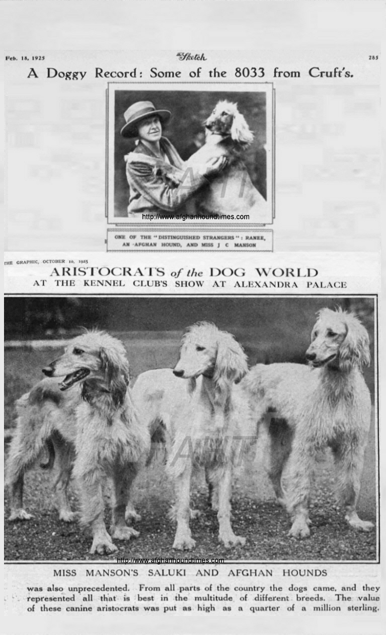 http://www.afghanhoundtimes.com Bell Murray/Cove Afghan photo gallery (The Sketch and The Graphic 1925)