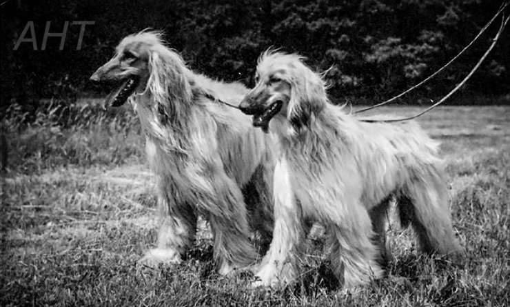 http://www.afghanhoundtimes.com PHOTO Jalalabad Barwala of Carloway and his daughter  Dil Khan of Carloway