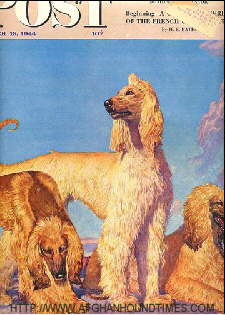 Afghan Hound Times - Saturday Evening Post 1944