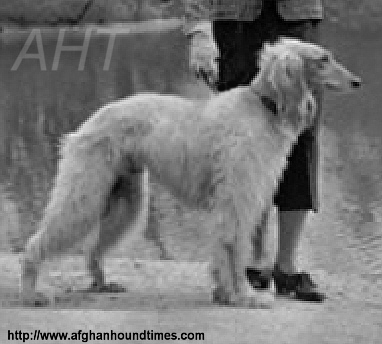 http://www.afghanhoundtimes.com France breed history. Afghan hound 1935