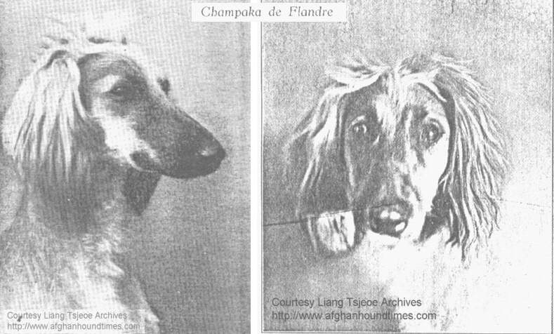 http://www.afghanhoundtimes.com photo pedigree article - The Liang Tsjeoe Afghan Hounds