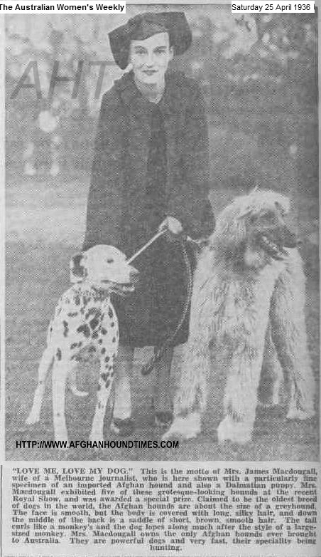 http://www.afghanhoundtimes.com PHOTO Mrs MacDougal with Dalmatian and Afghan hound 1935