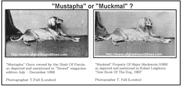 Early Afghan Hounds - Mustapha or Muckmukl 1880's