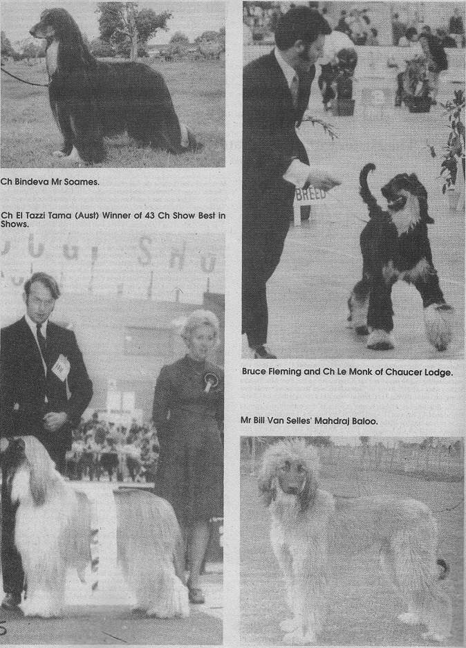 Afghan Hound Times photo - Early New Zealand Afghan Hounds