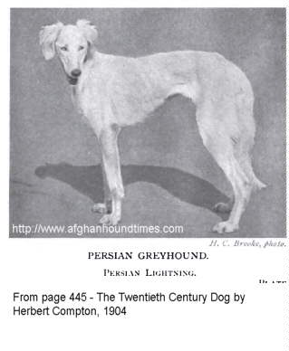 Early Afghan Hounds - Persian Greyhound 1904