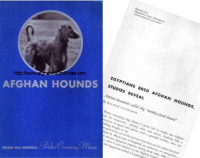 http://www.afghanhoundtimes.com Q A Shaw McKean Afghan Hound Pamplhet