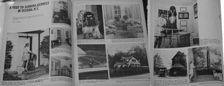 Afghan Hound Times - Sandina Feature, Popular Dogs November 1971