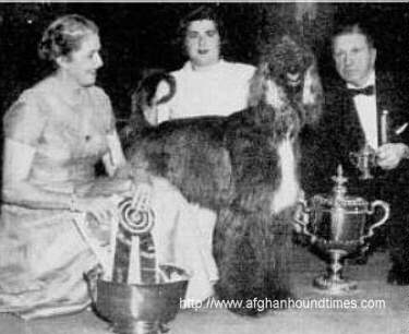 Afghan Hound Times - Photo Shirkhan Of Grandeur Westminser 1957