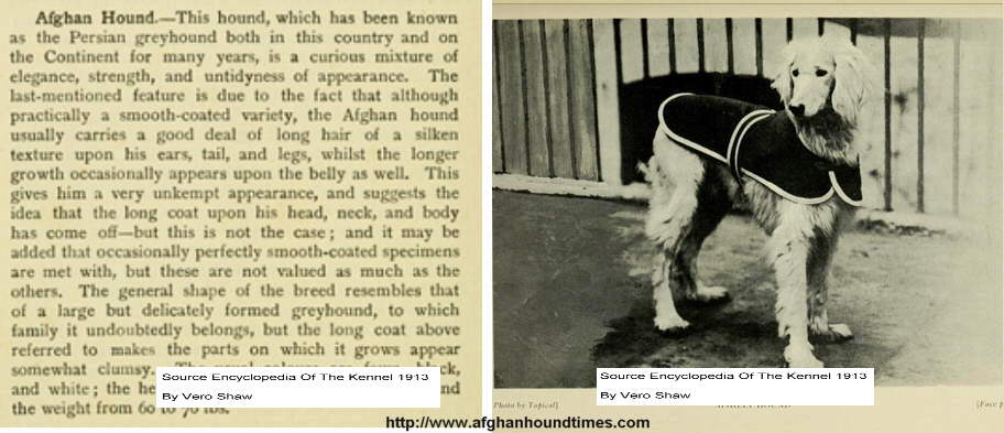Afghan Hound, Vero Shaw 1913, Encylopedia of the Kennel