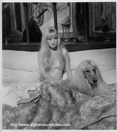 Afghan Hound Times -  Actress Monica Vitti with Afghan Hound 1967
