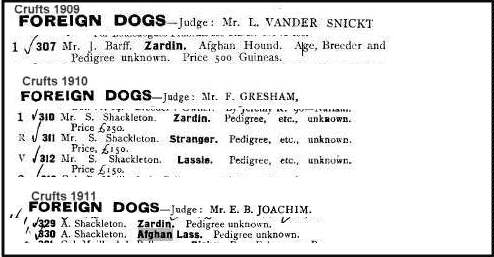 Early Afghan Hound - Zardin at Crufts 1909-1911